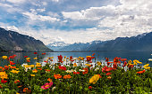 View on the mountains and Lake Leman from Montreux embankment. Colourful poppies on the foreground and Ailps Mountains on the background. Sunny day with blue sky and the clouds. Springtime.
