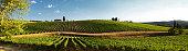 Beautiful vineyard and blue sky in Chianti, Tuscany. Italy