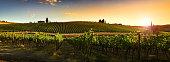 Beautiful vineyards in Chianti regio, Tuscany Countryside. Italy.