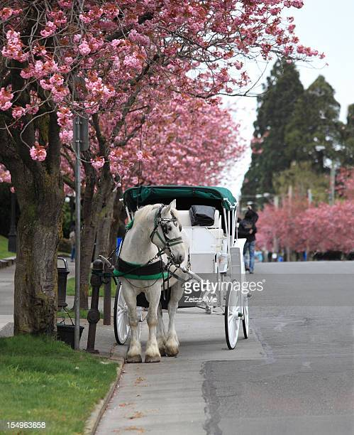Beautiful white horse and buggy