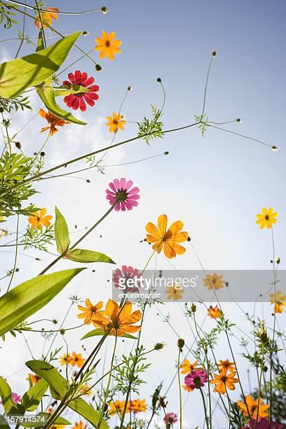 Belli fiori selvatici in un prato.