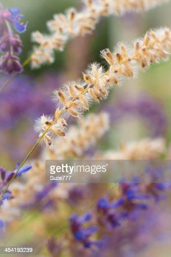 Belli fiori selvatici : Foto stock