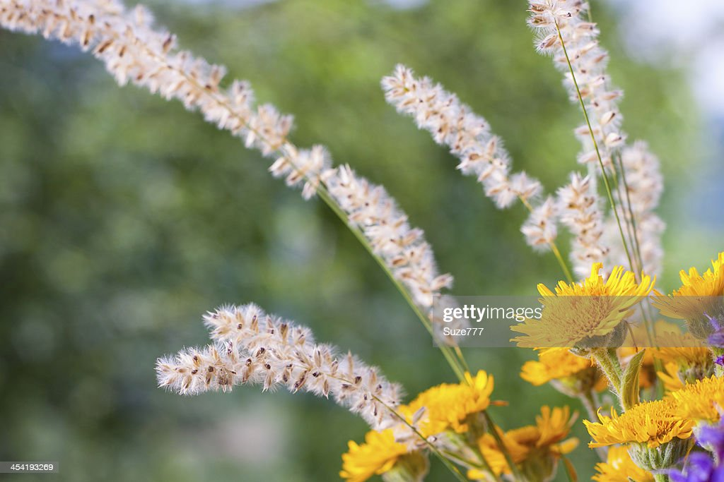 Hermosas flores silvestres : Foto de stock