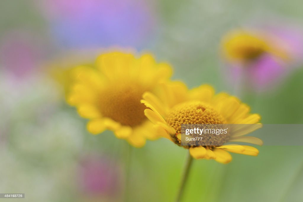 Bonito flores selvagem : Foto de stock