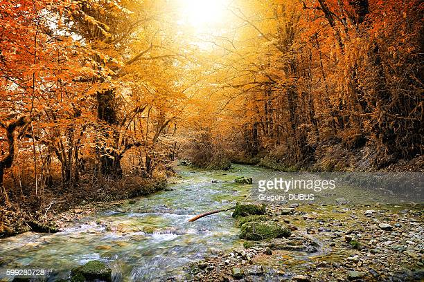 Beautiful wild fresh water stream in autumn orange sunny forest