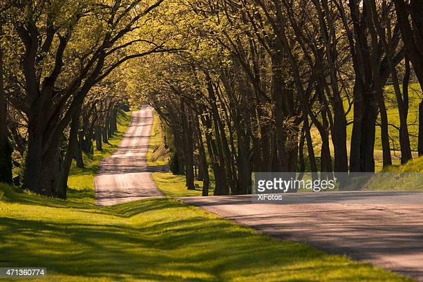 Bellissimo avvolgimento Strada di campagna all'ombra di alberi di primavera