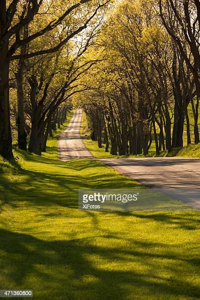 Hermoso bobinado country road, a la sombra de los árboles en la primavera de edad