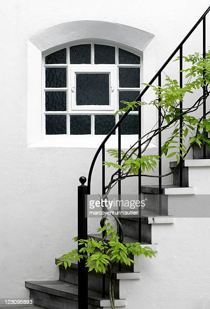 Beautiful Wisteria plant grows across an elegant domestic staircase