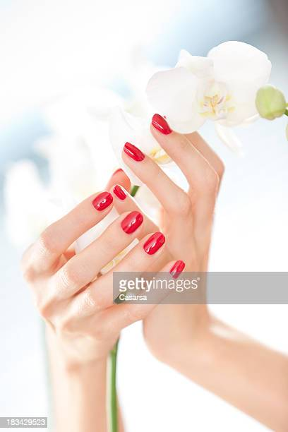 Beautiful woman's hands holding orchid flower