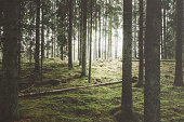 Beautiful woods forest