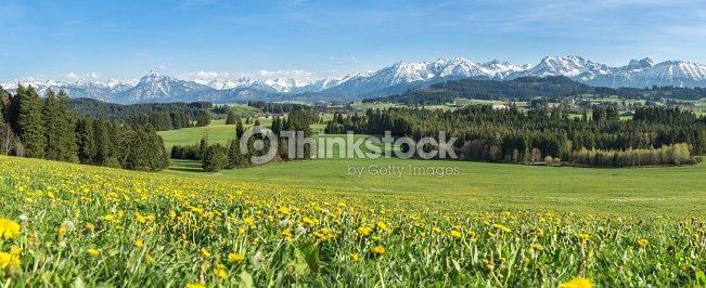 Schöne Gelbe Blumenwiese In Einer Idyllischen Berglandschaft Stock