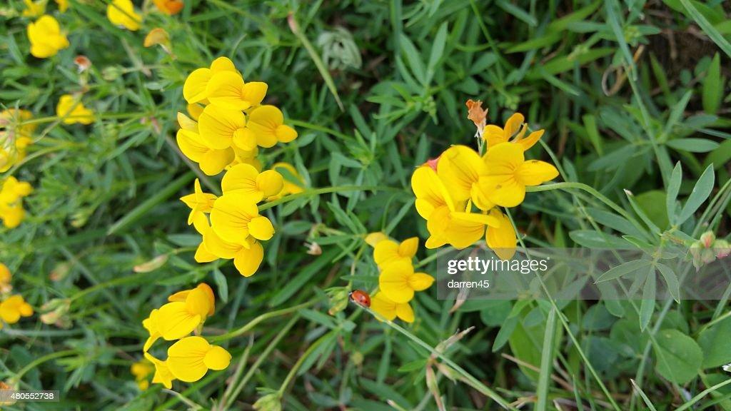 Flor hermosa amarillo : Foto de stock