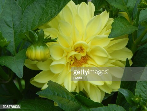 Beautiful yellow flower : Stock Photo
