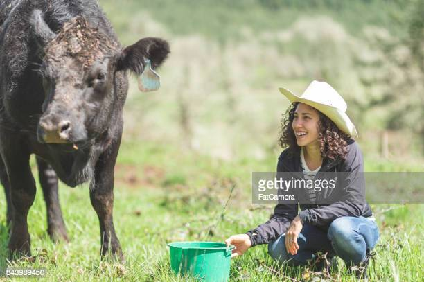 Beautiful young mixed race woman feeds the cattle on a warm summer day