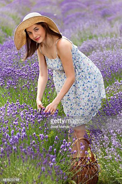Beautiful young woman cuts a lavender blooms