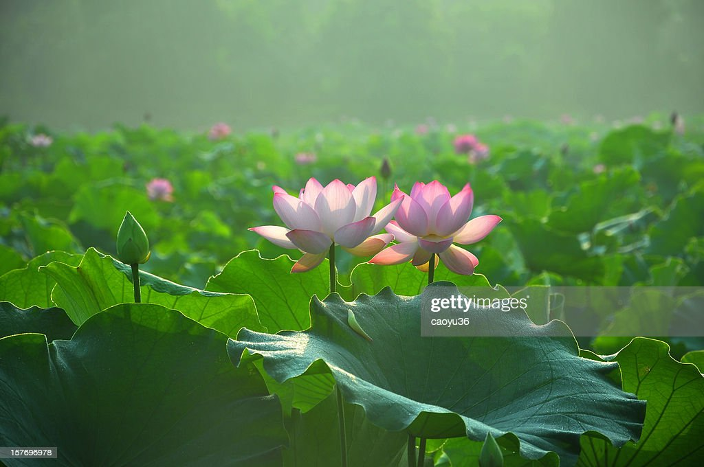 Beauty in nature : Stock Photo