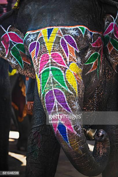 Beauty painted elephant