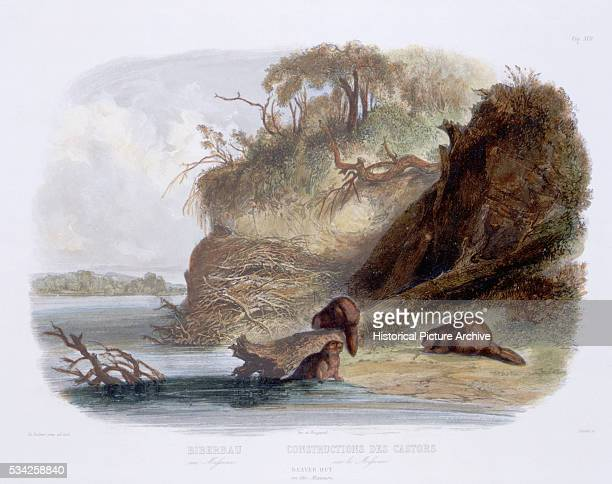 Beaver Hut after a Painting by Karl Bodmer