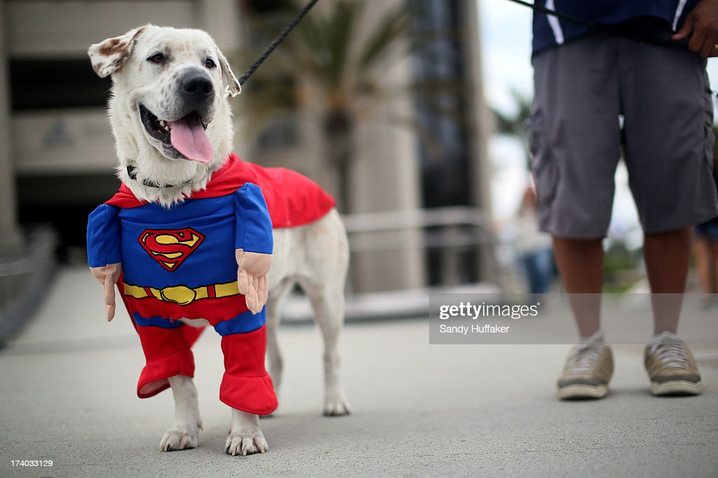 Beckham the dog sports a Superman costume during Comic Con on July 19, 2013 in San Diego, California. The Comic Con International Convention is the world's largest comic and entertainment event and hosts celebrity movie panels, a trade floor with comic book, science fiction and action film-related booths, as well as artist workshops and movie premieres.