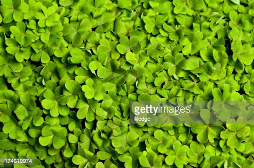 Bed of Clover