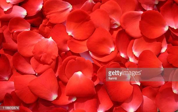 ベッドのバラの花びら-バレンティンの背景
