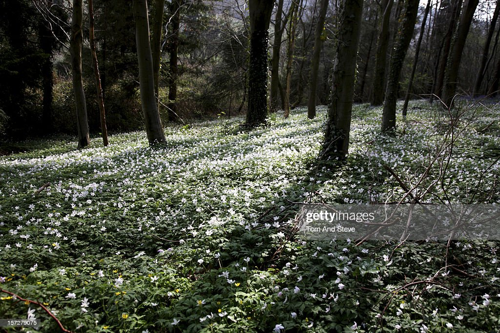 Bed of Spring flowers in the woods : Stock Photo