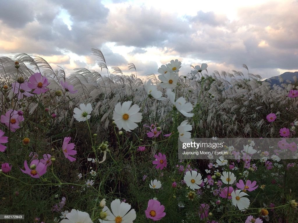 Bed Of Wildflowers : Stock Photo