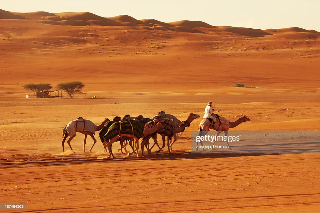 Bedouin and camels in desert - Wahiba Sands, Oman