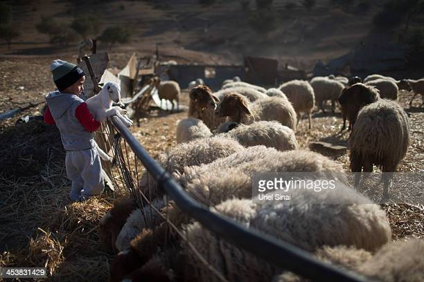 A Bedouin boy of the AlQiyaan tribe holds a lamb on December 5 2013 At the Bedouin village of Umm AlHiran Israel Roughly 200000 Bedouins live in the...