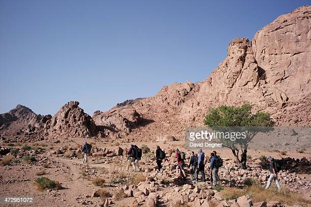 Bedouin guides lead tourists hiking through the mountains of South Sinai on April 18 2015 near St Catherine Egypt Bedouins guides in the Sinai...