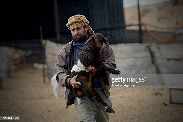 Bedouin man holding a sheep is seen in a Bedouin village in Negev on December 10 2013 The Israeli government has halted a controversial scheme dubbed...