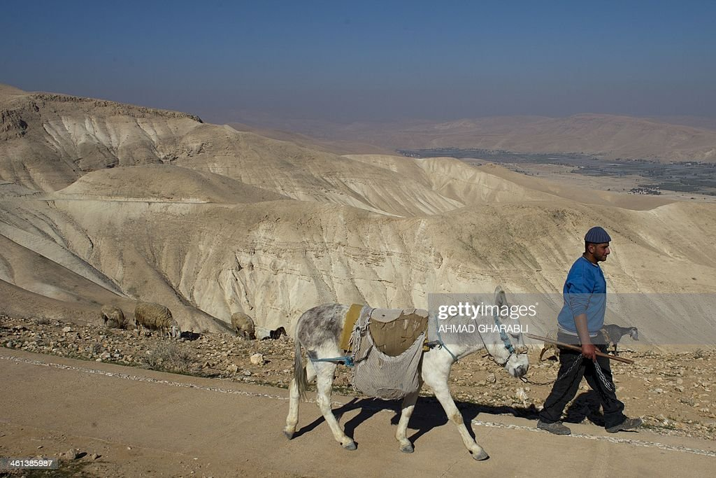 A Bedouin shepherd leads his herd of cattle (unseen) at the Judean desert overlooking the Jordan Valley on January 8, 2014 .