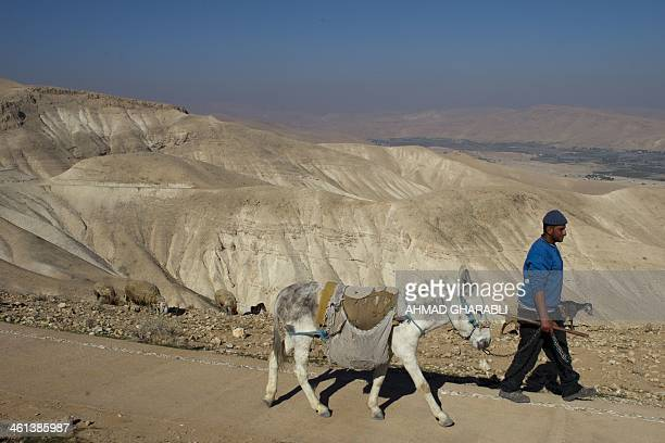 A Bedouin shepherd leads his herd of cattle at the Judean desert overlooking the Jordan Valley on January 8 2014 AFP PHOTO /AHMAD GHARABLI