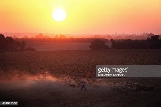 A Bedouin shepherd walks his sheep near Israel's border with the Gaza Strip on July 10 2014 Israeli warplanes kept up their deadly raids on Gaza but...