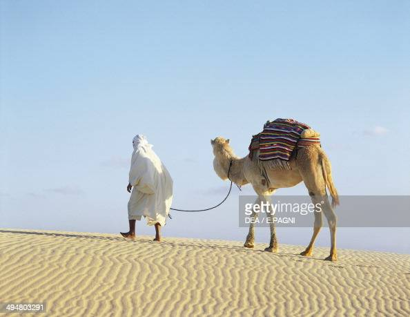 Bedouin with a camel Camelidae in the desert Nefta Tunisia