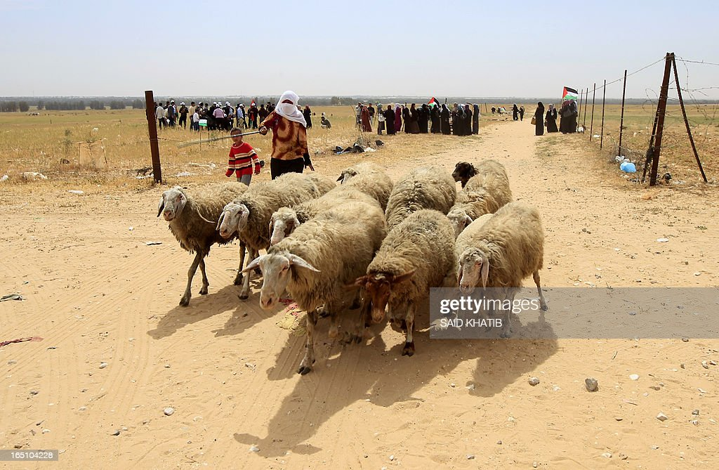 A bedouin woman herds a flock of sheep past Palestinian protesters taking part in a rally marking Land Day near the southern Gaza Strip's border with Israel, east of Rafah, on March 30, 2013. Land Day commemorates the death of six Arab Israeli protesters at the hands of Israeli troops during mass protests in 1976 against plans to confiscate land in Galilee.