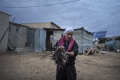 A Bedouin woman of the AlQiyaan tribe carries wood for a fire on December 5 2013 At the Bedouin village of Umm AlHiran Israel Roughly 200000 Bedouins...