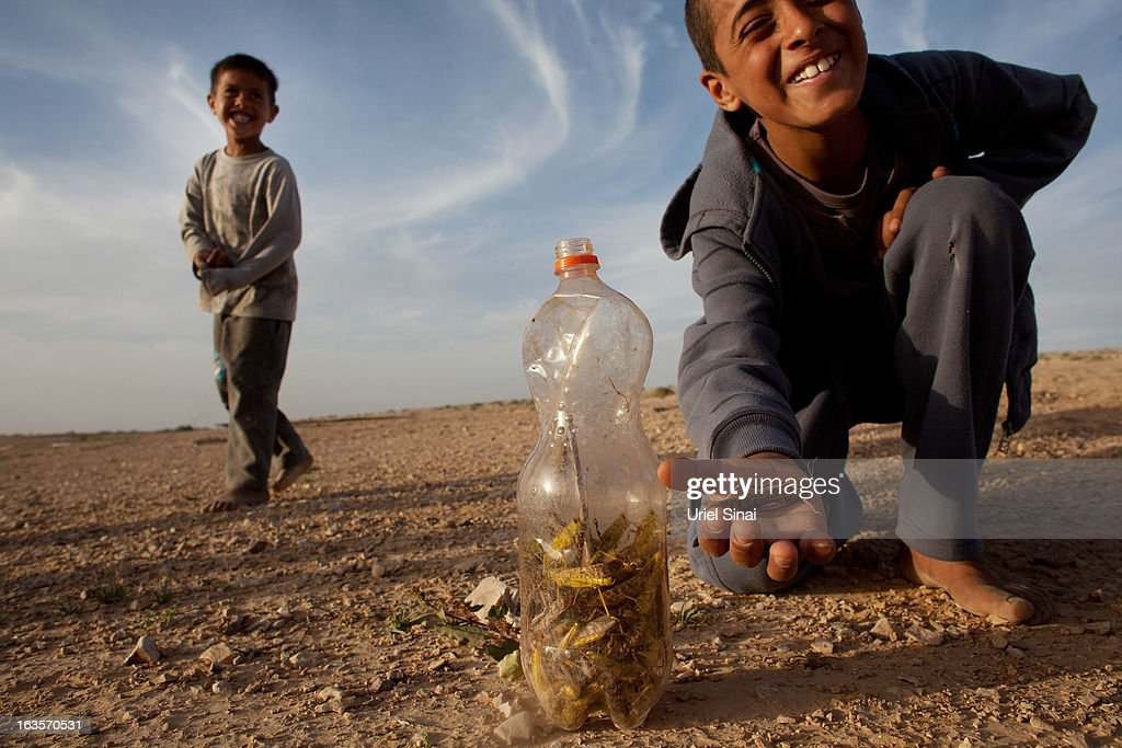 A Beduin boy collects locusts as a swarm arrives over his vilage in the Negev desert near the Egyptian Israeli border on March 12, 2013 at the Beduin vilage of Bir Hadage, Israel. Egypt and Israel have been swarmed with millions of locusts over the past few days causing wide spread disturbances.