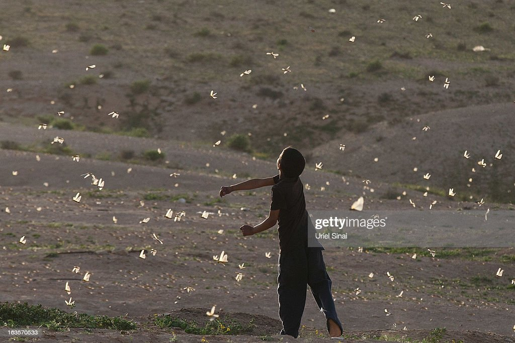 A Beduin boy plays as a swarm of locusts arrives over his vilage in the Negev desert near the Egyptian Israeli border on March 12, 2013 at the Beduin vilage of Bir Hadage, Israel. Egypt and Israel have been swarmed with millions of locusts over the past few days causing wide spread disturbances.