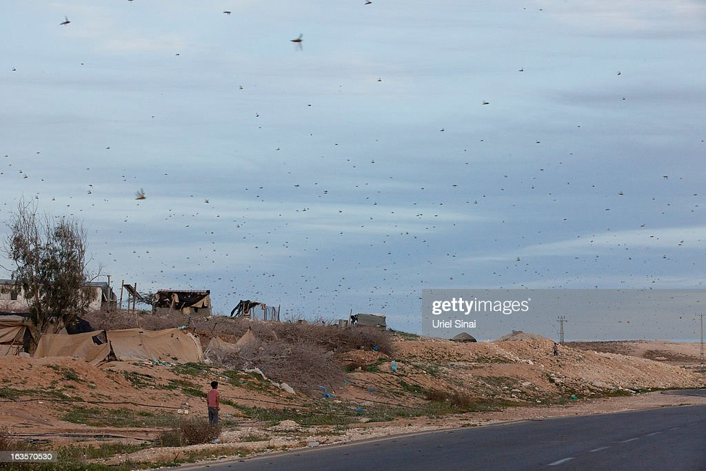 A Beduin boy watches as a swarm of locusts arrives over his vilage in the Negev desert near the Egyptian Israeli border on March 12, 2013 at the Beduin vilage of Bir Hadage, Israel. Egypt and Israel have been swarmed with millions of locusts over the past few days causing wide spread disturbances.
