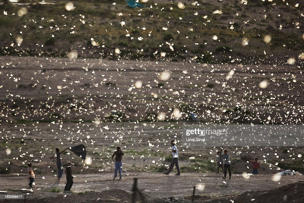 Beduin children play as a swarm of locusts arrive over their vilage in the Negev desert near the Egyptian Israeli border on March 12, 2013 at the Beduin vilage of Bir Hadage, Israel. Egypt and Israel have been swarmed with millions of locusts over the past few days causing wide spread disturbances.