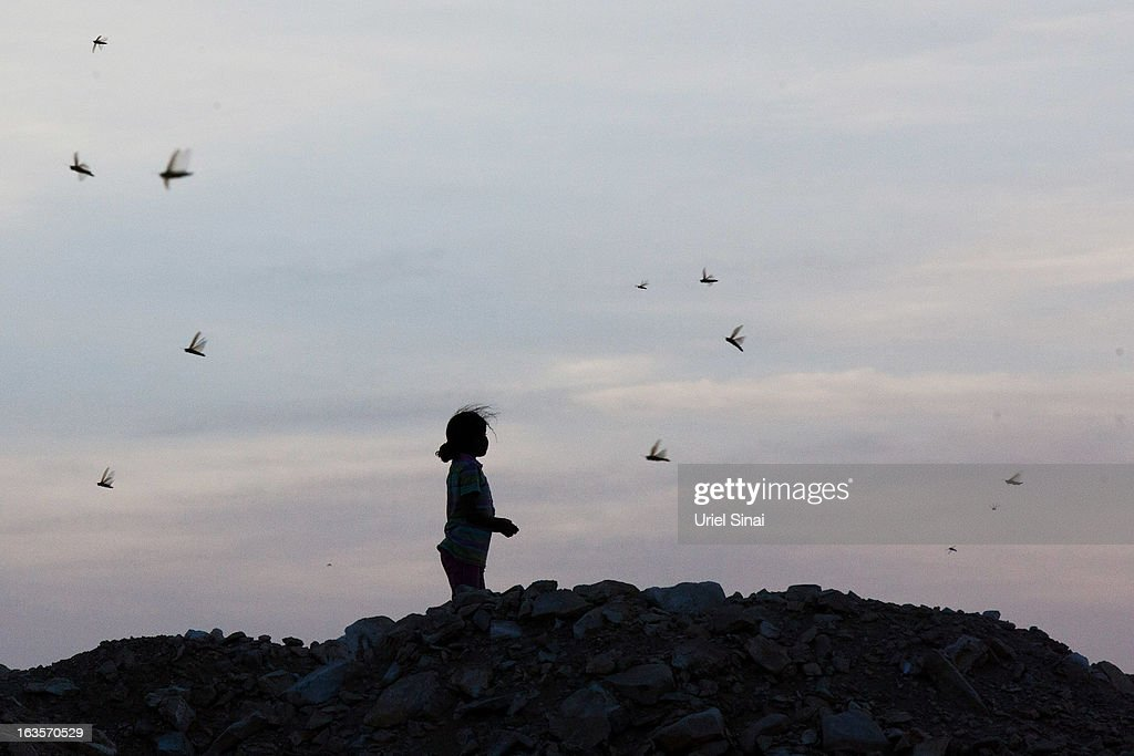 A Beduin girl watches as a swarm of locusts arrives over his vilage in the Negev desert near the Egyptian Israeli border on March 12, 2013 at the Beduin vilage of Bir Hadage, Israel. Egypt and Israel have been swarmed with millions of locusts over the past few days causing wide spread disturbances.