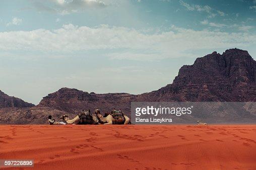 Beduin with his camels in Wadi Rum desert