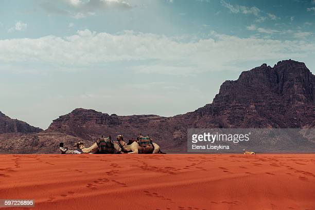 Beduin with his camels in Wadi Rum desert