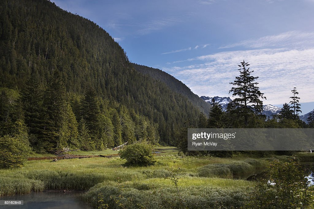 Bedwell sound mountains and forest. : Stock Photo