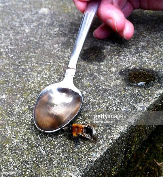 Bee being fed sugar water