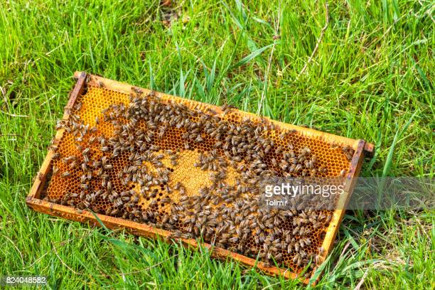 Bee collecting honey in honeycomb