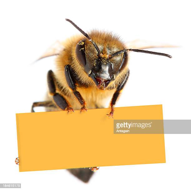 Bee holding blank placard
