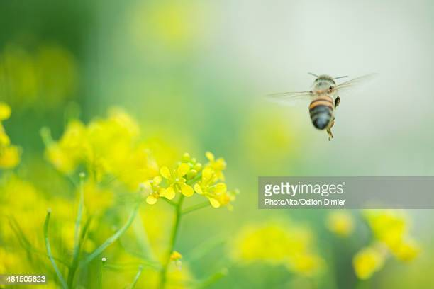Bee hovering over flowers
