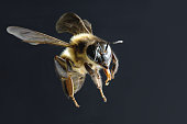 bee isolated on black background
